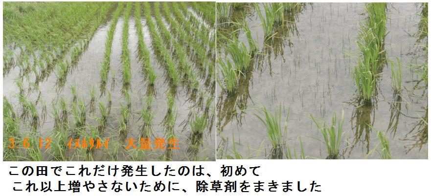 f:id:chuumeikun:20210612145230j:plain