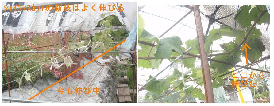 f:id:chuumeikun:20210616170602j:plain