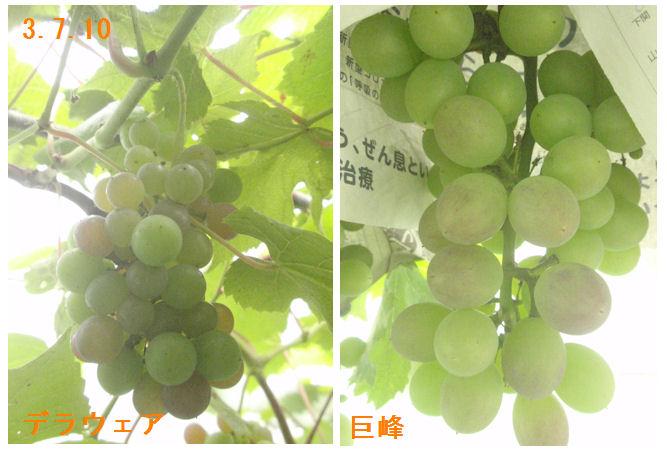 f:id:chuumeikun:20210710150859j:plain