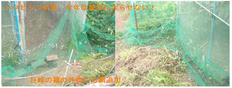 f:id:chuumeikun:20210710151039j:plain