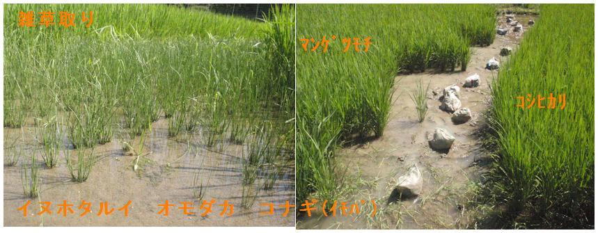 f:id:chuumeikun:20210714174412j:plain