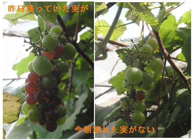 f:id:chuumeikun:20210720191742j:plain
