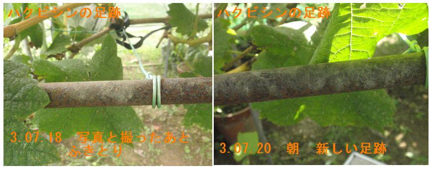 f:id:chuumeikun:20210720191957j:plain