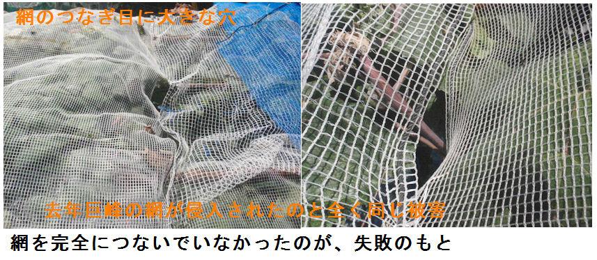 f:id:chuumeikun:20210720192134j:plain