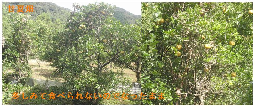f:id:chuumeikun:20210724202256j:plain