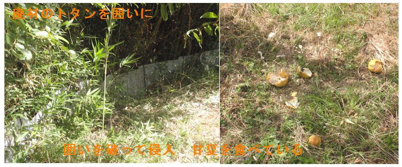 f:id:chuumeikun:20210724202425j:plain