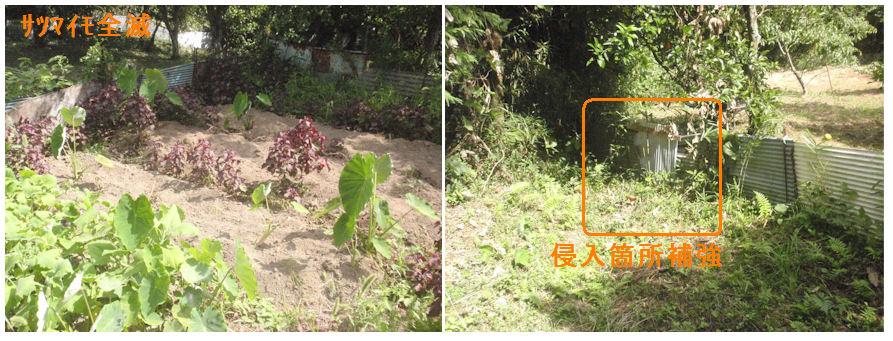 f:id:chuumeikun:20210724202711j:plain