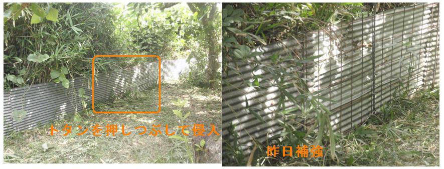 f:id:chuumeikun:20210724202820j:plain