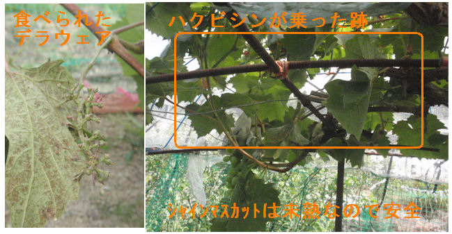 f:id:chuumeikun:20210724203215j:plain