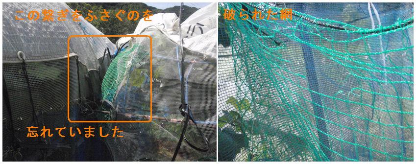 f:id:chuumeikun:20210724203332j:plain