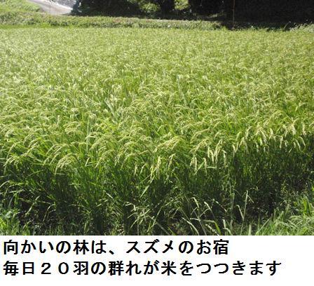 f:id:chuumeikun:20210804193500j:plain