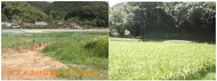 f:id:chuumeikun:20210804193655j:plain