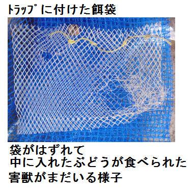 f:id:chuumeikun:20210804194019j:plain
