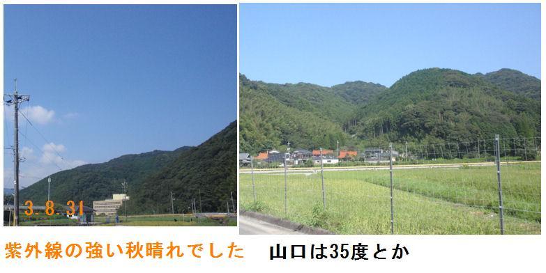 f:id:chuumeikun:20210831193948j:plain