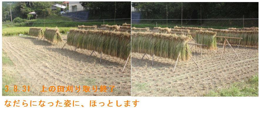 f:id:chuumeikun:20210831194819j:plain
