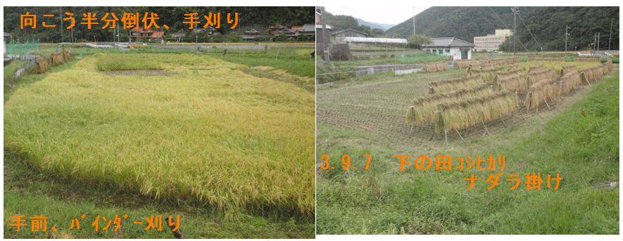 f:id:chuumeikun:20210907165040j:plain