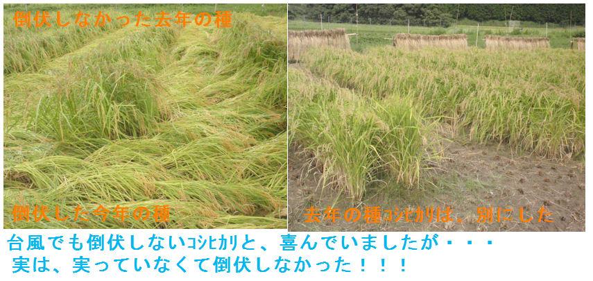 f:id:chuumeikun:20210907165426j:plain