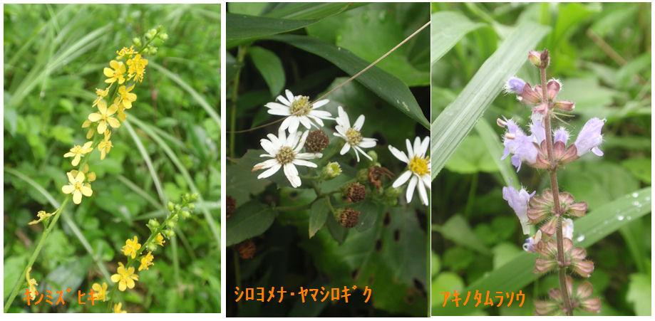 f:id:chuumeikun:20210911115648j:plain