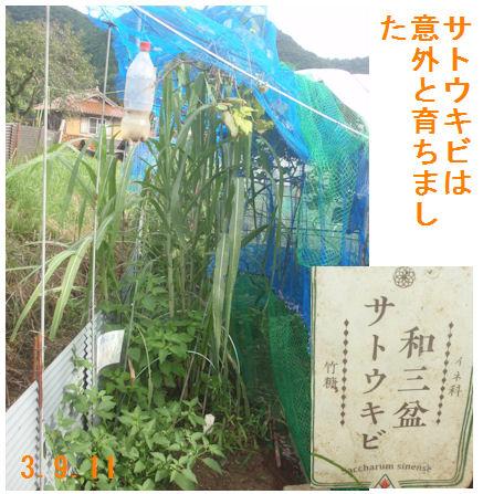f:id:chuumeikun:20210911115914j:plain