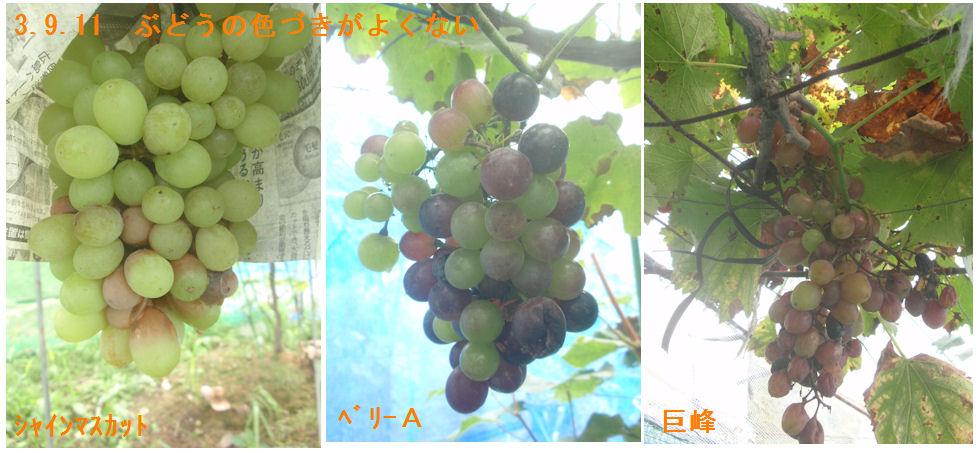 f:id:chuumeikun:20210911115955j:plain
