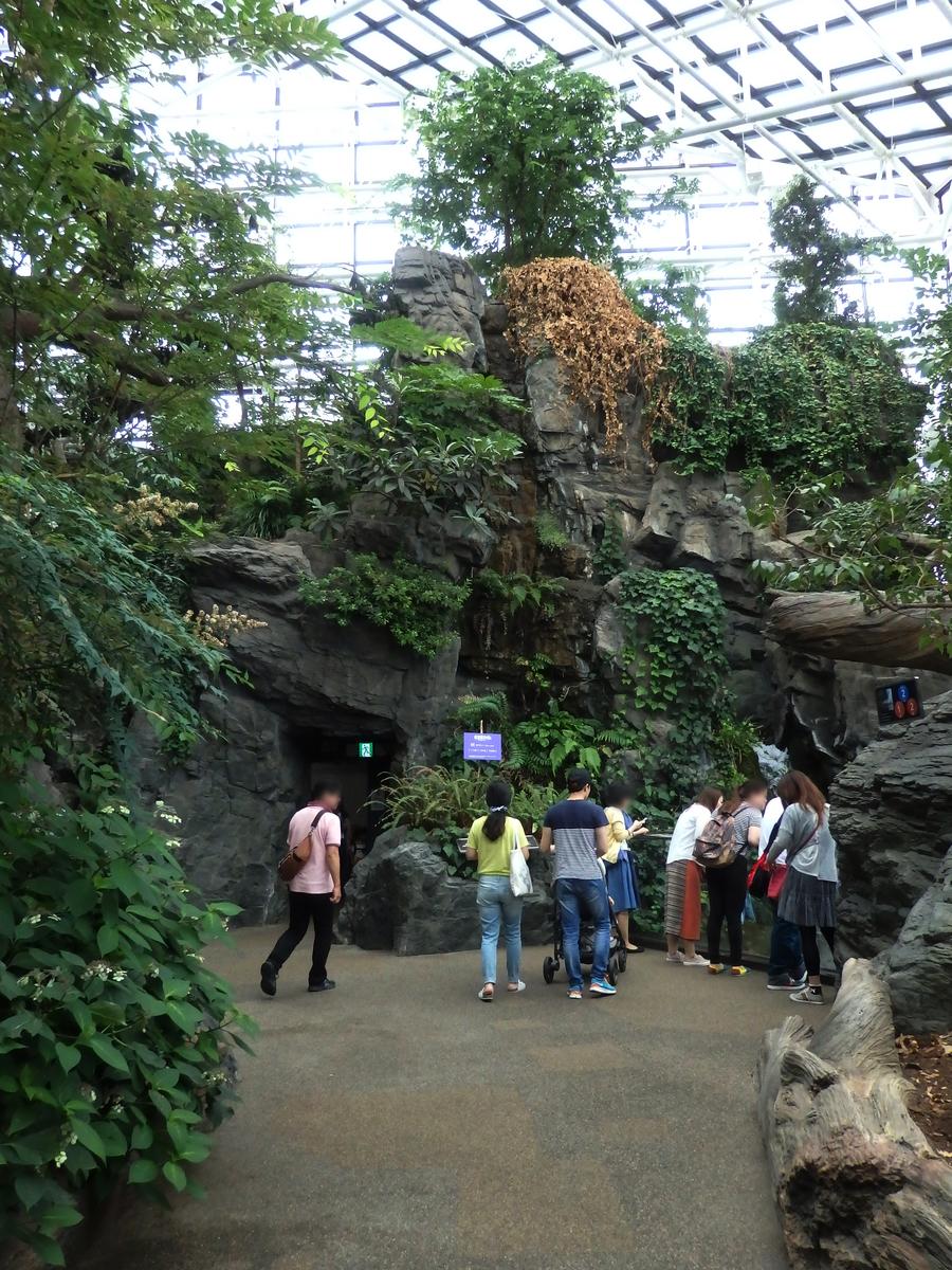 日本の森 海遊館 大阪 水族館