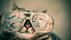 眼鏡をかけるねこ