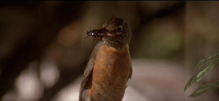 昆虫を咥えた鳥