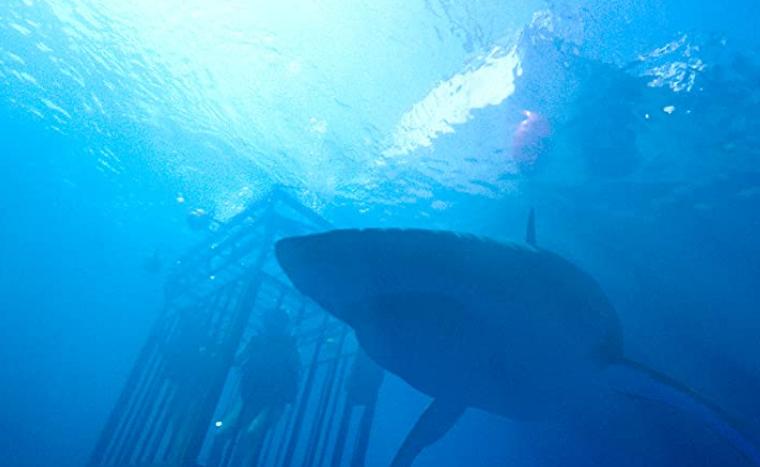 大きくて凶暴なサメと檻