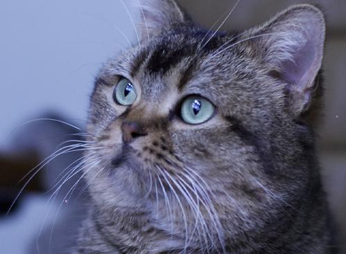 猫のピート