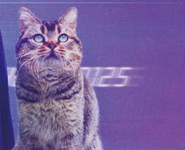 『夏への扉/キミのいる未来へ』猫のピート