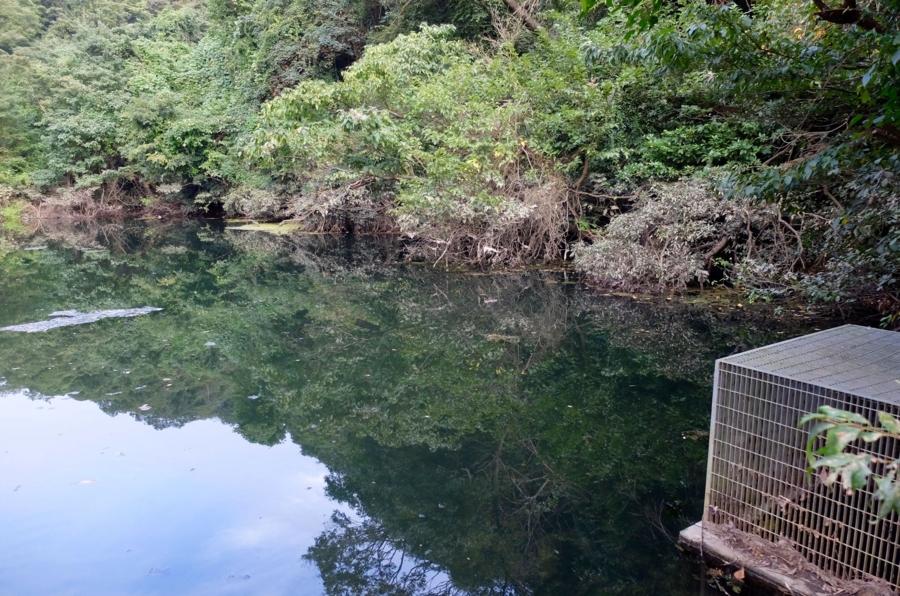 虫山池(神奈川県横須賀) - 水辺遍路