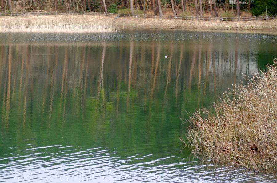 大成池(鳥取県伯耆) - 水辺遍路