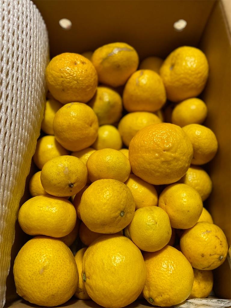 f:id:citrusmaxima:20210217211017j:image