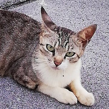 f:id:cityneko-ishigaki:20190714230026j:plain