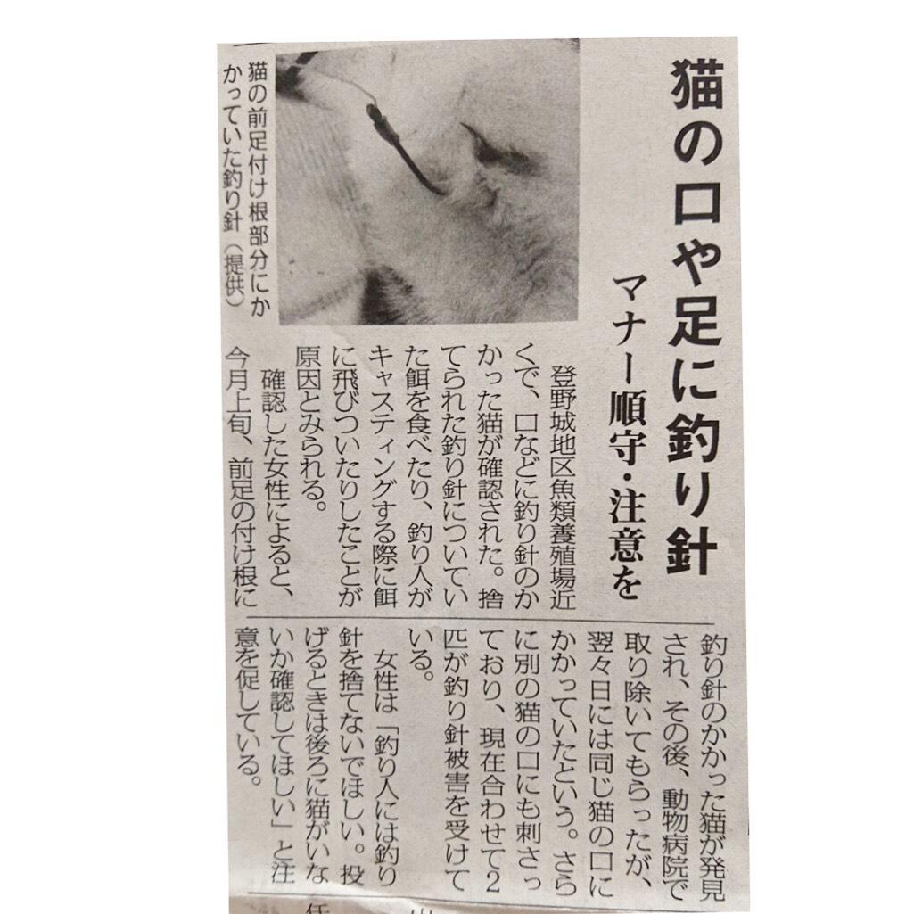 f:id:cityneko-ishigaki:20190731205555j:plain