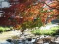秋の高尾山