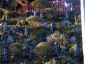秋の高尾山薬師院
