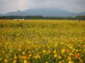 [山梨バス旅行]花畑