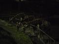[動物]夜の動物園 キリン