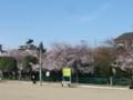 田井西公園の桜