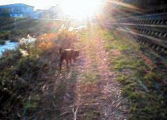 光あるうち光の中を歩むマ