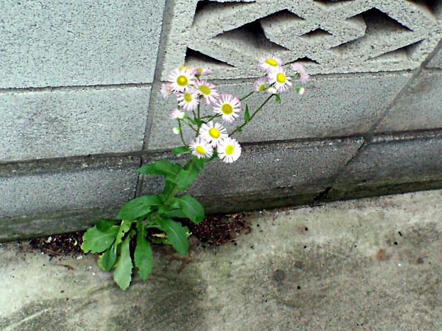 コンクリートの花(クリックで拡大画像)