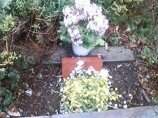 くーちゃんのお墓