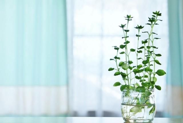 アロマサロンインテリア花