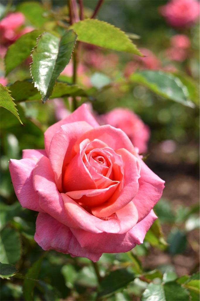 f:id:cll_rose:20161203074056j:image