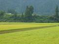 今朝の新潟県南魚沼市は久しぶりのくもりで涼しいです