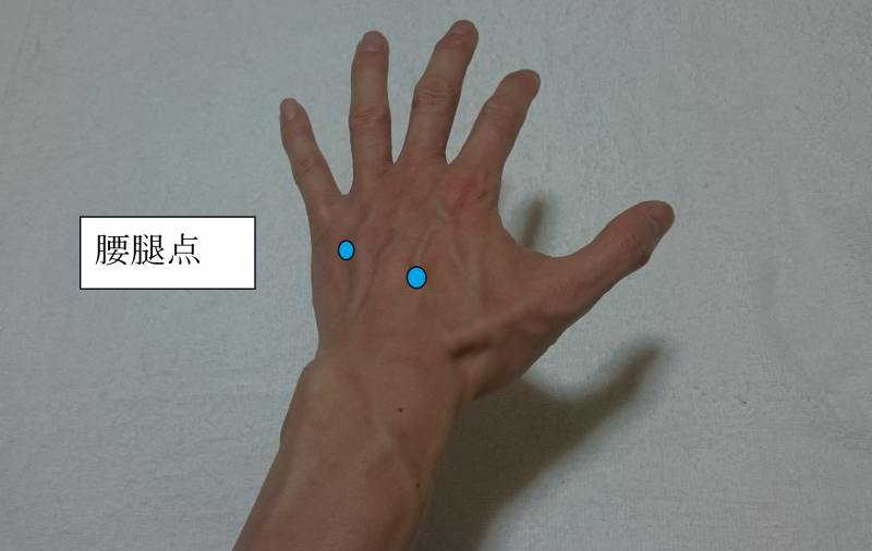 札幌訪問鍼灸治療院腰腿点(ようだいてん)