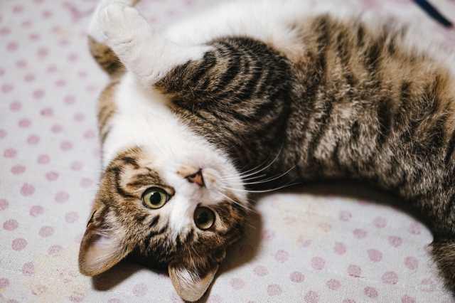 猫に宿るトキソプラズマは人を楽観的で挑戦しやすい性格にする