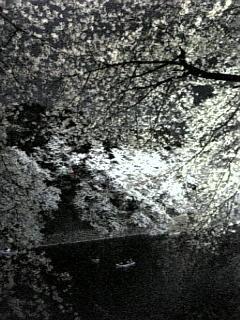 f:id:cloudy-is:20080402183346j:image