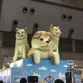 旅フェスのバルーン秋田犬
